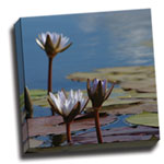 canvas_lillies